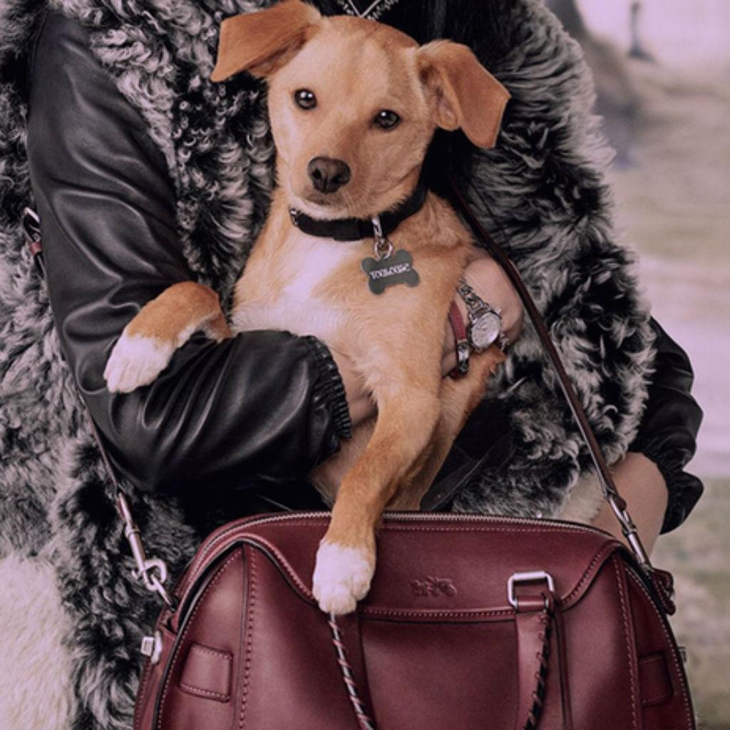 アリアナ・グランデの愛犬トゥールーズ
